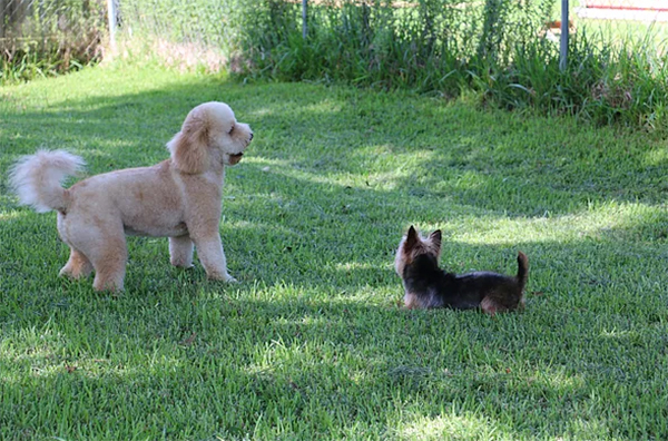 dogs in the play yard